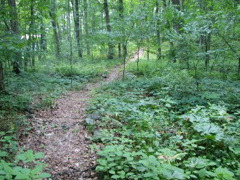Path to Sunshine Mountain